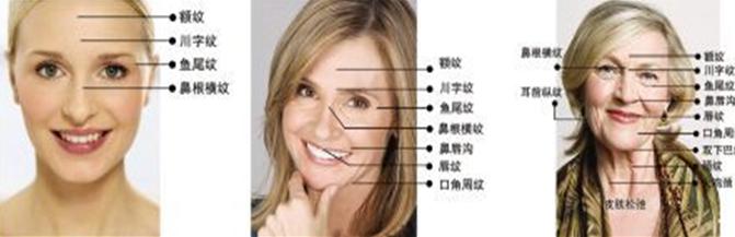面部皮肤结构层,由外至内依次是表皮层